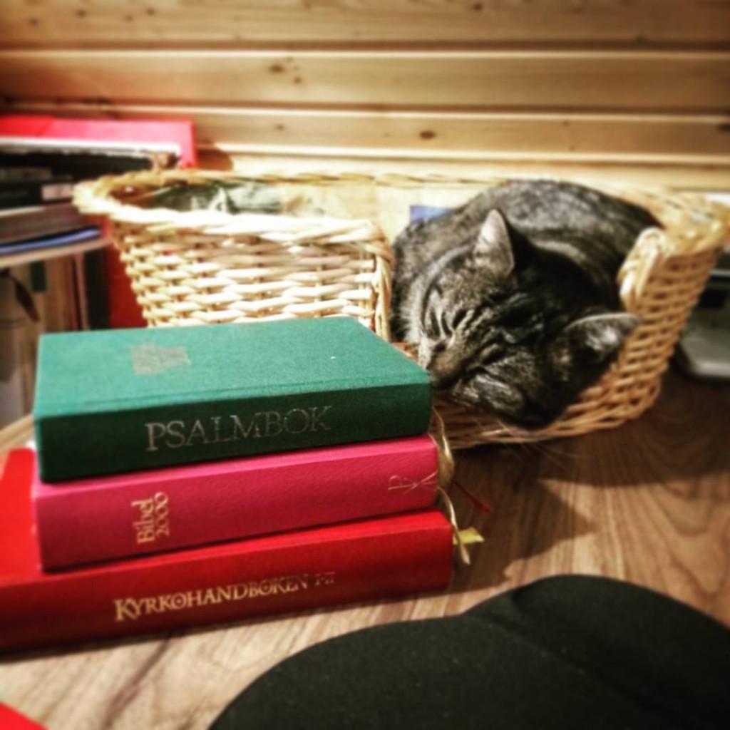 bild på böcker och en katt